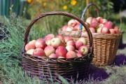 CJ Cluj a demarat procedurile de achiziţie pentru extinderea programului de furnizare a fructelor şi în rândul preșcolarilor