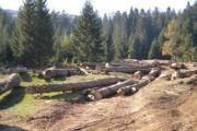 Începe acţiunea de plantare în Pădurea Clujenilor