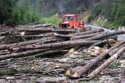Clujean prins în flagrant la tăiat ilegal de lemne