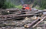 """A fost lansat raportul """"Jaful pădurilor din România"""". Iată ce scoate în evidență"""