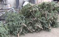 Lemnele și pomii de Crăciun sunt la ordinea zilei când vine vorba de confiscări