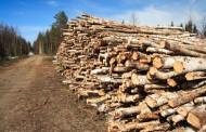Cantitate uriașă de lemn confiscată de la un gater din Cluj