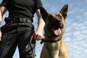 Copil salvat de un câine poliţist