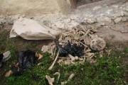 Descoperire șocantă! Oase umane găsite în Florești, în timpul unor excavări