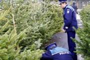 Comercianții de pomi de Crăciun, verificați în centrele comerciale din Cluj