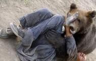 Bărbat atacat de urs la Măguri Răcătau!