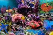 Marea Barieră de Corali poate ajunge ca o groapă de gunoi