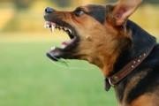 Un câine terorizează zeci de familii din Mănăștur