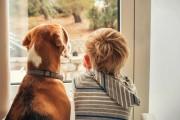 S-a descoperit secretul! De ce câinele și omul se împacă atât de bine
