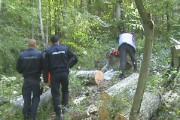 Penibil! În primele 9 luni ale anului polițiștii din Cluj au confiscat material lemnos de 1 milion de lei. Atât se fură într-o zi!