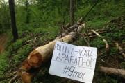 De Ziua Europei clujenii ies să protesteze împotriva defrișărilor de păduri. Vezi în ce alte orașe din România și străinătate au loc acțiuni!
