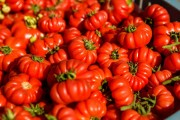Ministerul Agriculturii îi laudă pe producătorii români de tomate