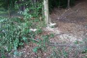 FOTO - Hoții nu taie lemne numai din munți, le găsesc în Făget și nimeni nu le are treaba