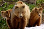 Urs de 40.000 de euro, vânat fără drept în pădurile Clujului