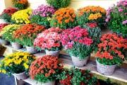 Amplasamentele din Cluj-Napoca aprobate pentru comercializarea florilor şi lumânărilor cu ocazia zilei de 1 noiembrie