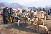 Târgul de animale din Dej a fost închis. Locația funcționa fără autorizație DSVSA