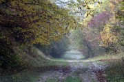 Descoperire ȘOCANTĂ în Pădurea Hoia din Cluj, cea despre care se știe că este blestemată