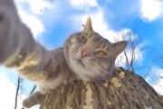 VIDEO - Motanul Manny își face selfie-uri cu o cameră GoPro