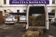 UPDATE - FOTO - Confiscare fără precedent în Cluj