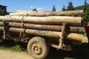 Amendă mai mare decât valoarea lemnelor confiscate