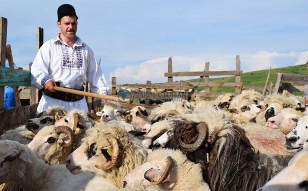 Caprele și oile amenințate, pericolul este la granița cu Bulgaria