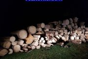 FOTO - Polițiștii din Beliș și Mărișel le-au dat o nouă lovitură hoților de lemne