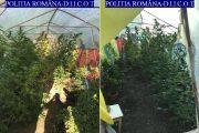 Diana Felicia Ogradă, Sergiu Aluaş și Paul Adrian Maja sunt clujenii depistați cu cultura de cannabis din cartierul Iris