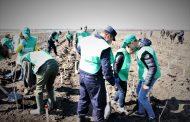 Peste 23.000 de voluntari au participat la acțiunile de împădurire