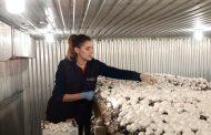 Firmă din Germania angajează muncitori în agricultură (P)