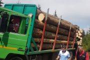 Poliţiștii au confiscat o tonă de ciuperci și metri cubi de material lemnos