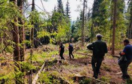 Beliș: Pădurar vizat de un dosar penal
