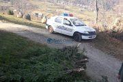 FOTO - A început furtul de brazi de Crăciun. Aproape 250 au confiscat polițiștii clujeni într-o localitate